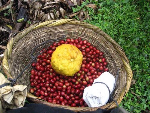 coffee_nicaragua_baskets
