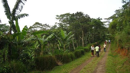 coffee_nicaragua_farm1