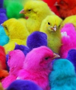 neon chicks
